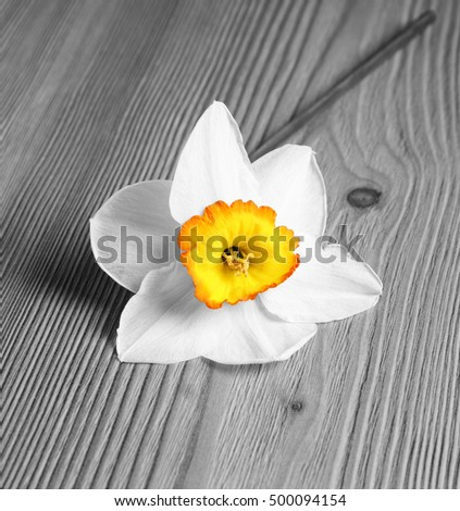 Bright flower on wooden background