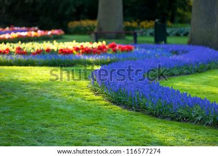 Bright flowerbed in Keukenhof - famous Holland spring flower park. Small GRIP shot - stock photo