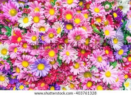 Bright flowers background - stock photo