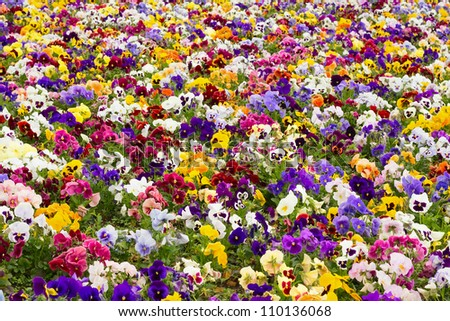 bright flowers in the garden - stock photo