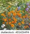 Bright flowers on the flowerbed in city park. - stock photo