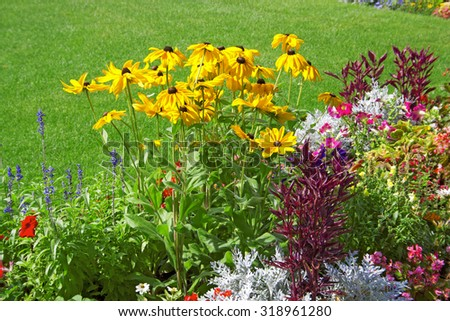 Bright flowers rudbeckia in a city park - stock photo