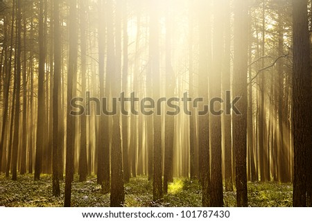Bright forest in the morning