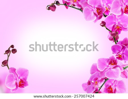 Bright frame made of orchid flowers with space for text - stock photo