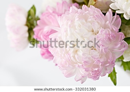 Bright garden blooming flowers, photographed large. - stock photo
