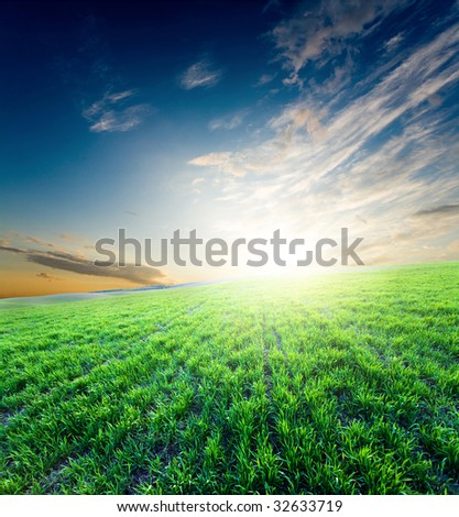 Bright glowing sunset over growing green crops on the field