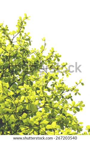 Bright green decorated leaves with branches photographed in a botanical garden showing the changes of seasons. Its spring in March. A tranquil scenery and an wonderful image for a background.  - stock photo
