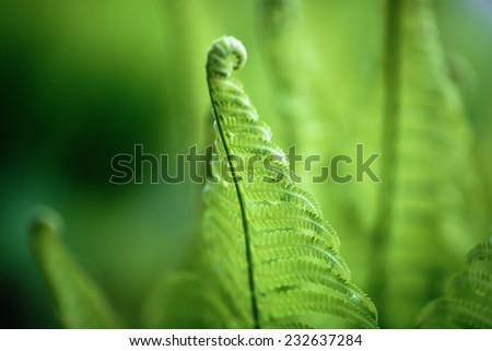 Bright green fern. Shallow depth of field. Focus on the main site. - stock photo