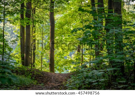 Bright green forest natural walkway in sunny day light. Sunshine woods trees. Sun through vivid green forest. Outdoor peaceful forest trees with sunlight. Green summer forest landscape in warm light