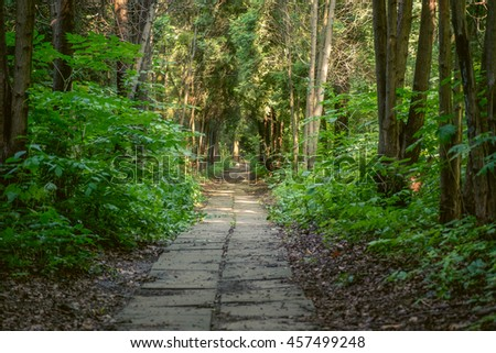 Bright green forest with walkway asphalt road in sunny day light. Green forest with walkway. Sunshine forest trees. Nice path between peaceful forest trees. Forest in light. Green forest nature - stock photo