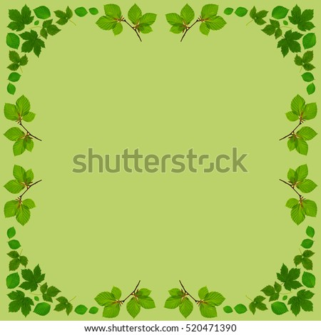 bright green frame with green beech leaves and branches in Square format