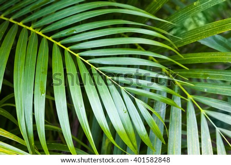 Bright green fresh palm tree leaves, tropical nature background photo - stock photo