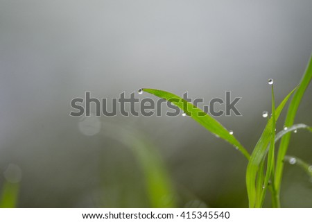 Bright green grass covered in water drops