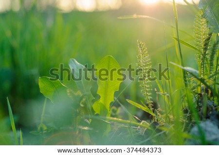 Bright green grass in the setting sun