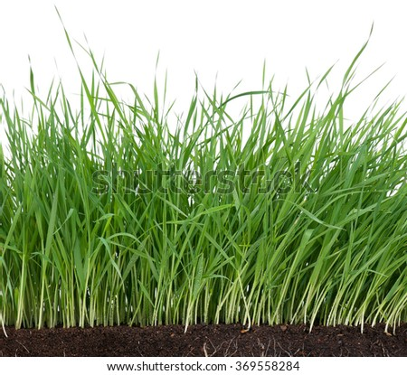 Bright green grass with roots in the organic soil - stock photo