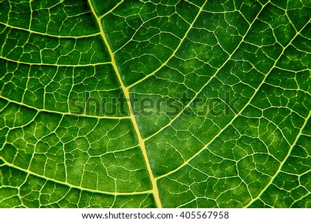 bright green leaf close up, texture - stock photo