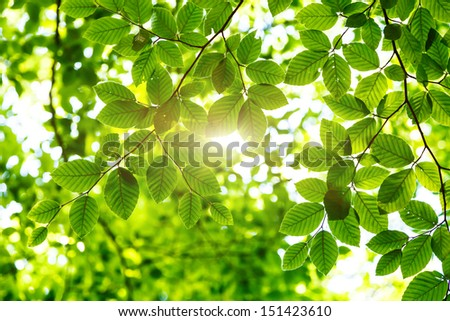 Bright green leaves on the branches in the forest. Crimea, Ukraine, Europe. Beauty world.