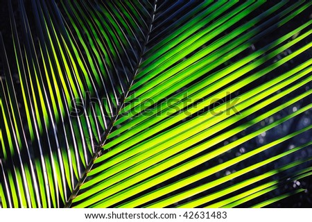 Bright green palm fronds from a short distance