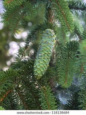 bright green pine cone on a lovely sunny day