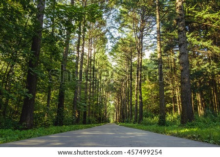 Bright green pine tree forest with asphalt road in sunny day light. Green forest with walkway. Sunshine forest trees. Nice path between peaceful forest trees. Forest in light. Green pine forest nature - stock photo