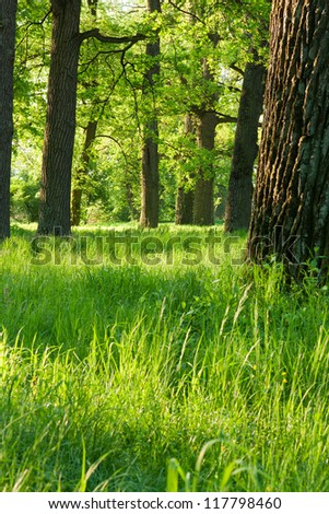 Bright green spring nature in the rays of the rising sun - stock photo