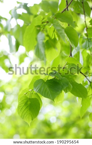 Bright juicy young green foliage on tree branches