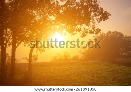 Bright misty morning in the mountains with oak trees in the foreground. natural composition - stock photo