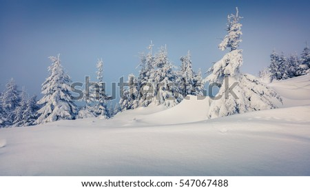 Bright morning scene in the mountain forest. Misty winter landscape in the snowy wood, Happy New Year celebration concept. Artistic style post processed photo.