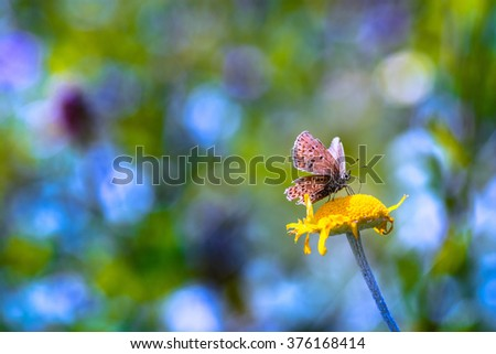 Bright, multi-colored background with a butterfly sitting on a yellow flower. - stock photo
