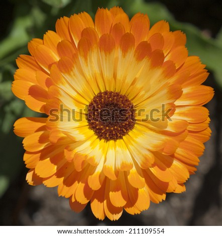 Bright orange and yellow daisy with green blurred background