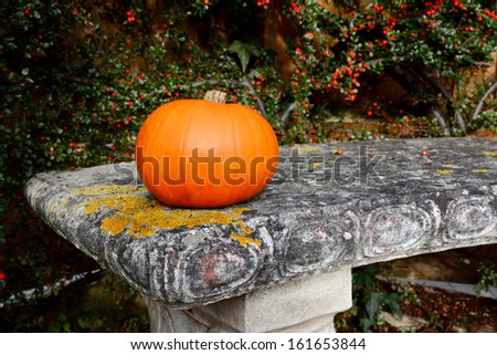 Bright orange gourd on a lichen-covered stone bench with red cotoneaster berries - stock photo