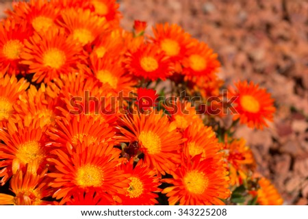 Bright orange marigold flowers with shallow depth of field and space for text