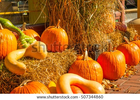 Bright orange pumpkins with gourds and straw bales arranged to make a colorful autumn decorative outdoor display.