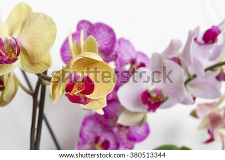 Bright orchid flowers. Background of flowers orchids. Exotic beautiful flowers.