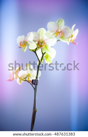 bright orchid on a colorful pastel background