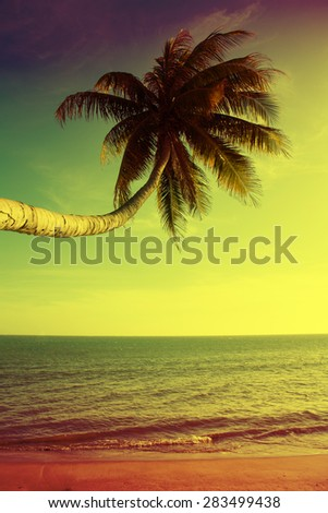 bright palm on sea background