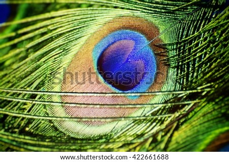 Bright Peacock Feather Natural Background - stock photo