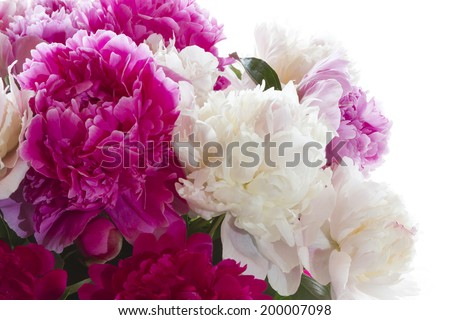 Bright peonies on a white background. Bouquet for Valentine's Day