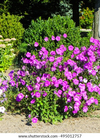 Bright petunia flowers on flowerbed in a park