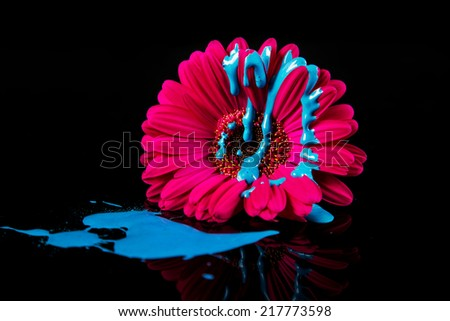 Bright pink flower, with blue paint