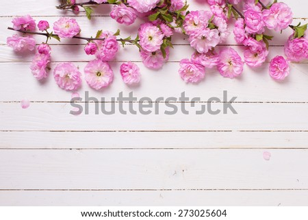 Bright pink   flowers on white  painted wooden planks. Selective focus. Place for text.  - stock photo
