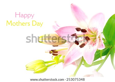 bright pink lily, blossom and buds isolated on white background, sample text happy mothers day - stock photo