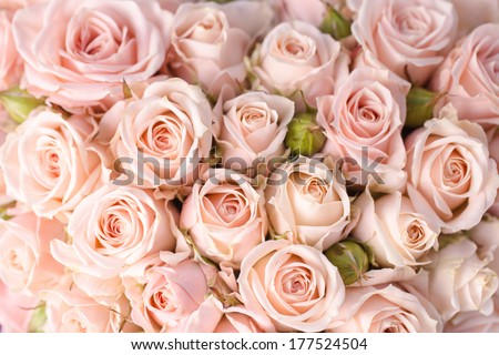 Bright pink roses background - stock photo