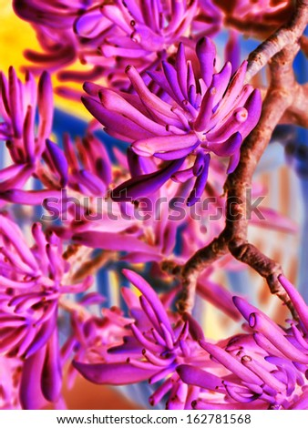 bright plant close up picture - stock photo