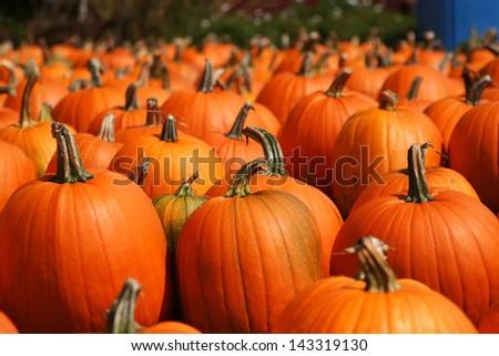 Bright pumpkins autumn outdoor still life  - stock photo