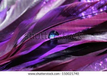 Bright purple feathers with a bright blue water drop - stock photo