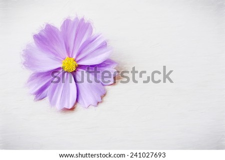 bright purple flower  - illustration based on own photo image