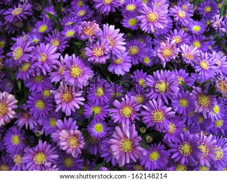 Bright Purple Flowers Bunch Background - stock photo