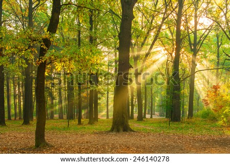 bright rays of the sun in the morning empty forest - stock photo