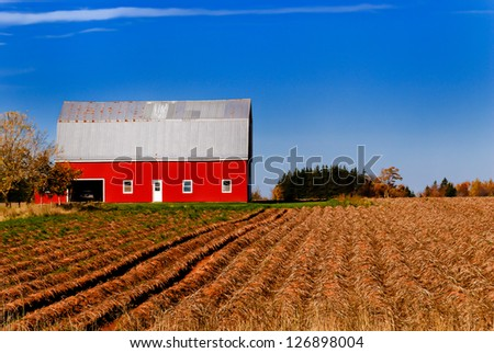 Bright red barn against a blue sky, harvested potato rows leading up to the building - stock photo
